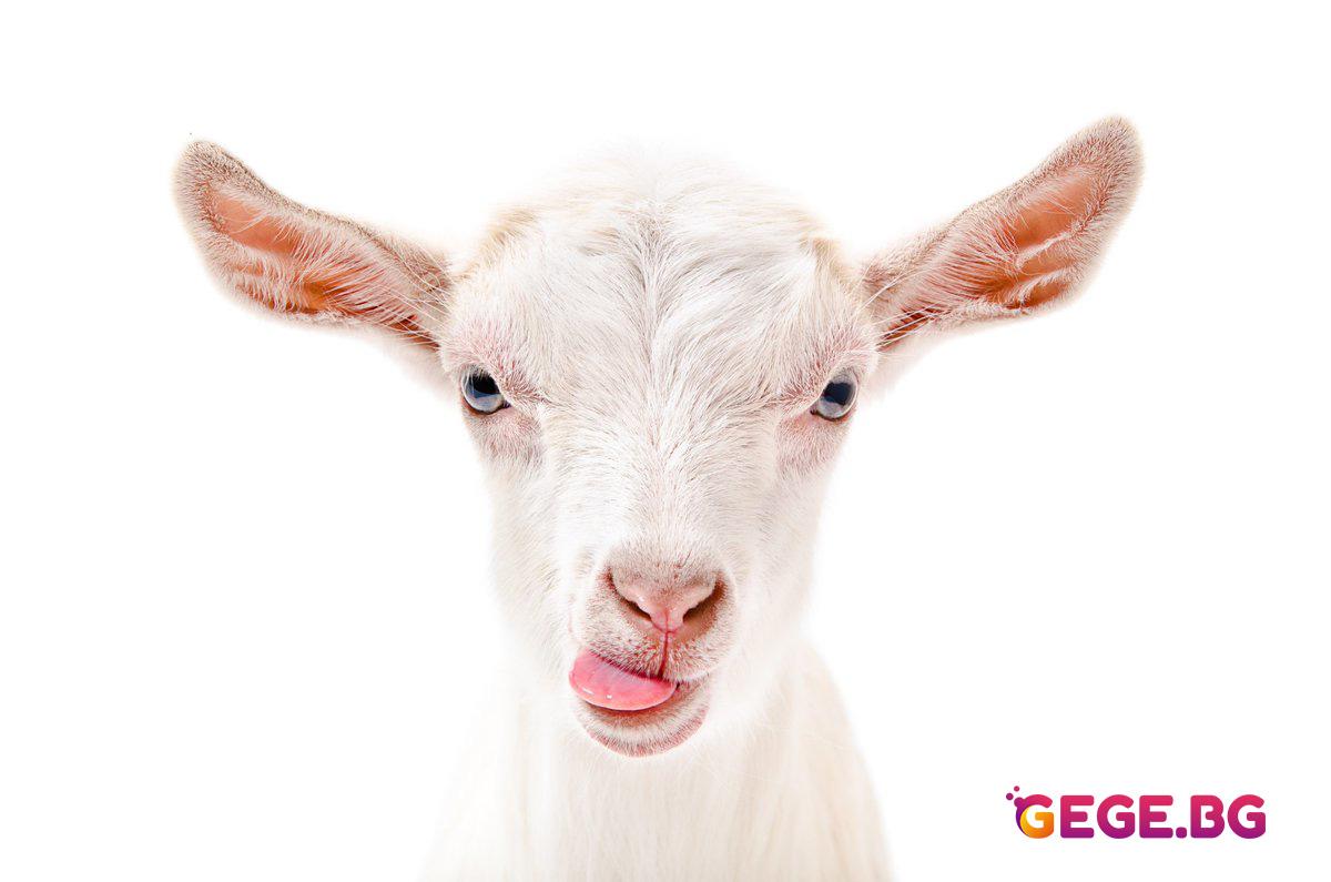 Кози крещят като хора