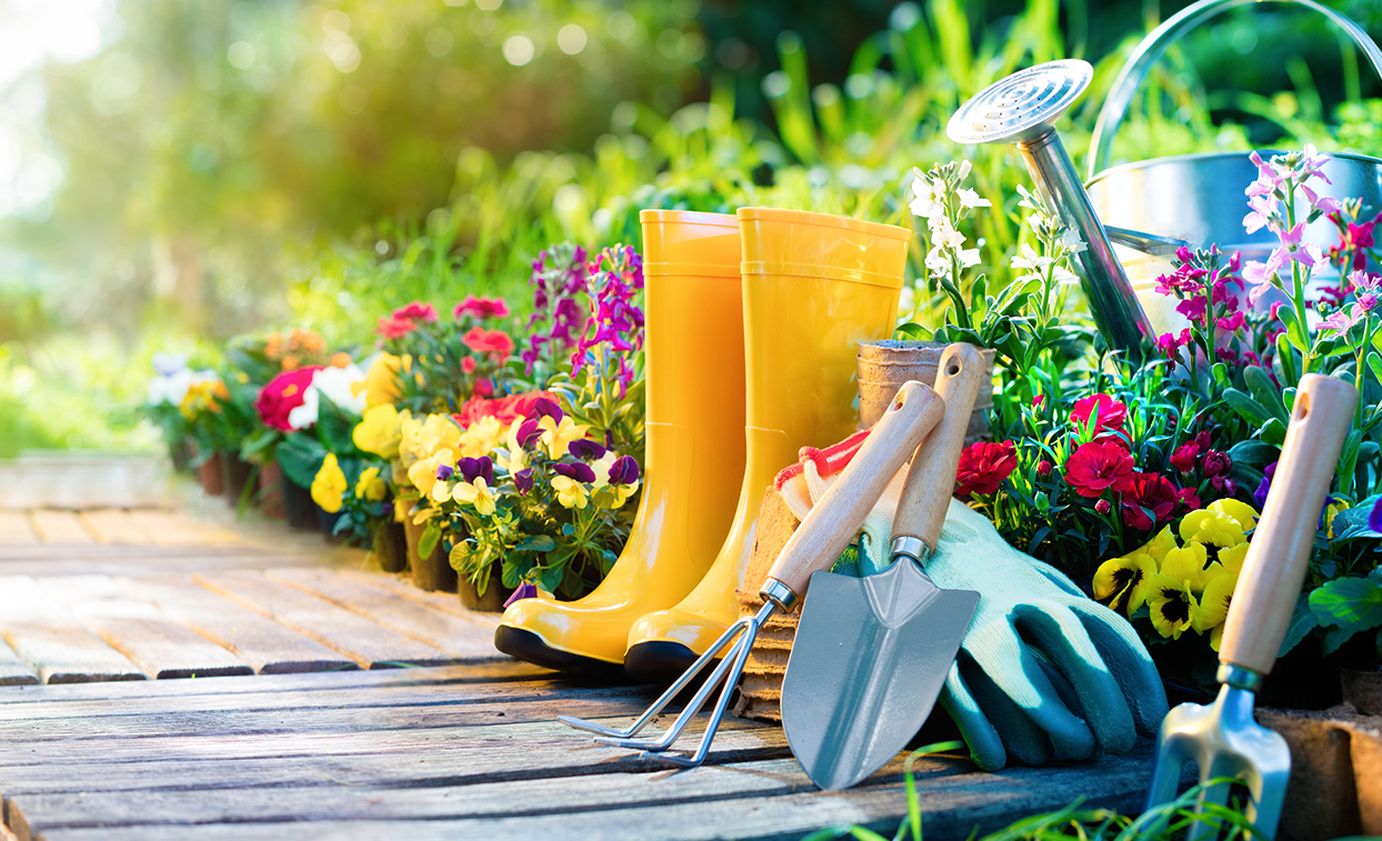 Градински лилии, Най-красивите летни градински цветя