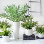 Ferns Plant to decorate room