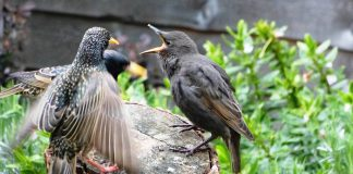 Effective Methods For Controlling Common Pesky Birds