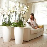 Orchid Plant to Decorate Room
