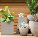 plant ideas to decorate room